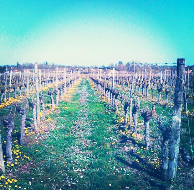 Never-ending vineyards