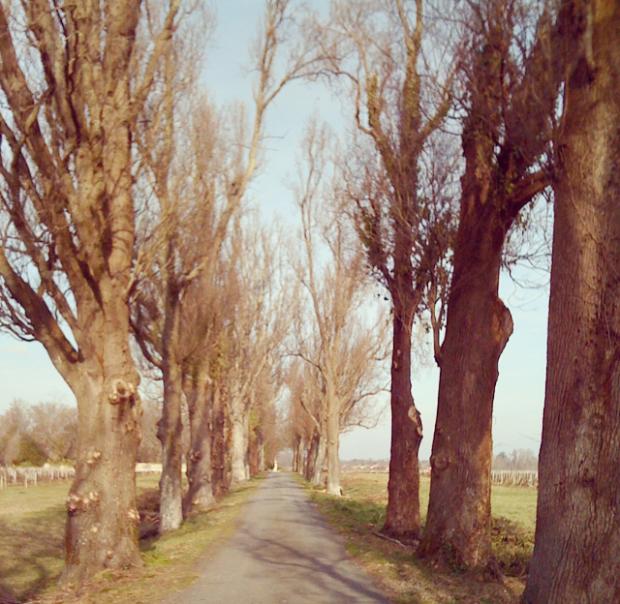 My favorite walking path